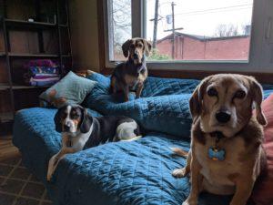 Millie, Luke, and Bo